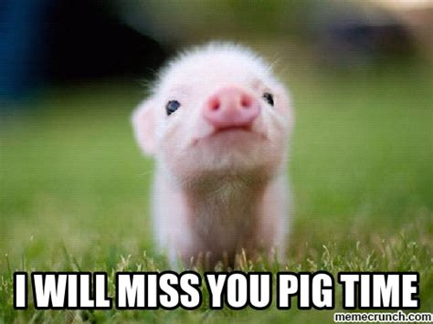 I Will Miss You Meme - i will miss you pig time