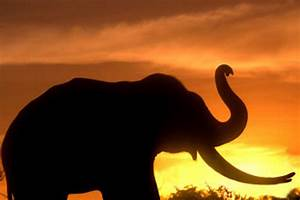 3 forest staff, 2 cops hurt in jumbo attack incidents ...