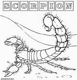 Scorpion Coloring Pages Desert Colorings Animal sketch template