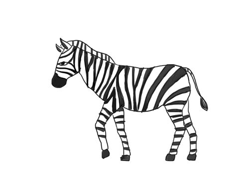Drawing Clipart Zebra Pencil And In Color Drawing