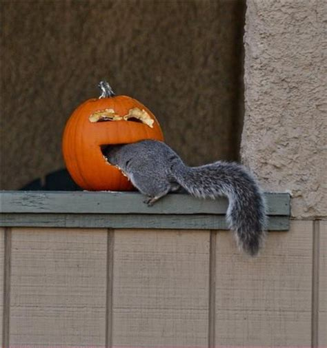 funny halloween animal pictures  images