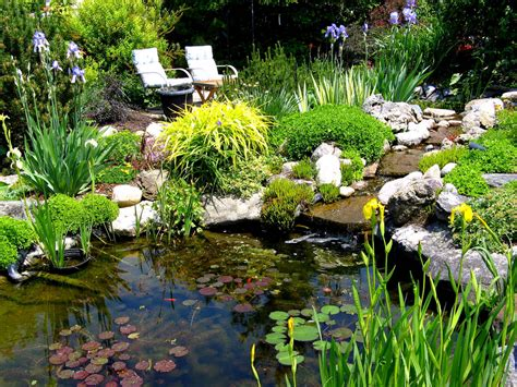 Backyard Garden Ponds by Plants For A Pond Welcome Wildlife