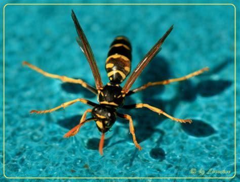 nutzen wespen tiere in der natur 187 wespen