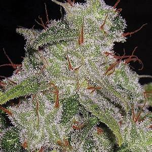 1000+ images about Cannabis Strains on Pinterest   Weed ...