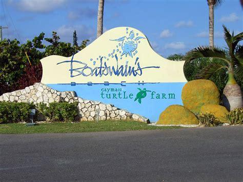 Boatswain Course by Boatswain S Turtle Farm Grand Cayman Island Dolphin Swimming