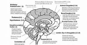 Die Biologie Blog  Biology Of The Brain
