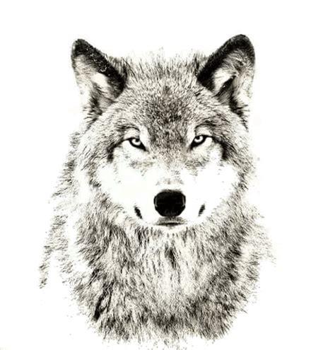 Cool Cat Hd Wallpaper Wolf Head Png
