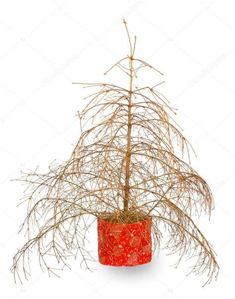 Weihnachtsbaum Ohne Nadeln by Weihnachtsbaum Ohne Nadeln Stockfoto 169 Geniuskp 69131395