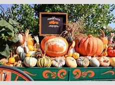 Live Oak Canyon Pumpkin Patch In Yucaipa California