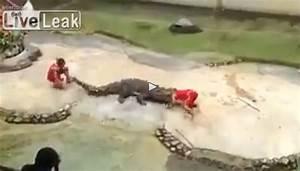 VIDEO: Watch a crocodile bite a zoo trainer's head in ...