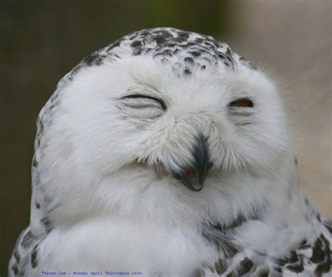 cool animals pictures  funny owls  laughing pictures