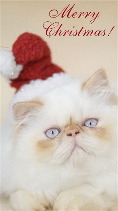 merry christmas cat pictures photos and images for facebook pinterest and