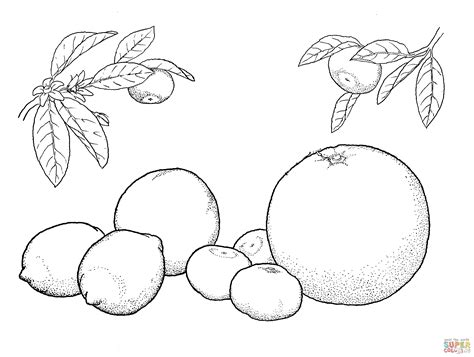 Oranges And Lemons Coloring Page