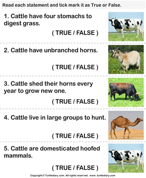 facts  cattle worksheet turtle diary