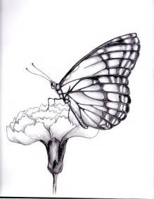 Butterfly Flower Drawing