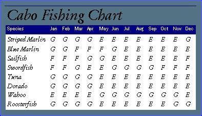 info cabo san lucas panga fishing  panga boat