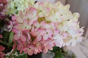 Wie Lange Blühen Hortensien : hortensien in der kiste smillas wohngef hl ~ Frokenaadalensverden.com Haus und Dekorationen