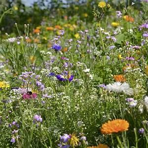 Graines Fleurs Des Champs : m lange de fleurs pour abeilles graines biologiques ~ Melissatoandfro.com Idées de Décoration