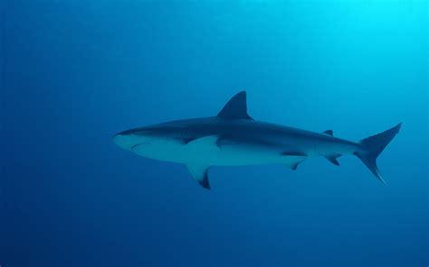 image bureau de vote fond d écran requin