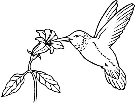 animal coloring pages  printable coloring pages