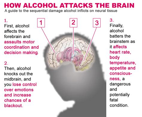 Alcohol's Damaging Effects On The Brain « Abenaitwe Cliff