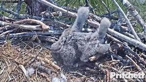 Southwest Florida Eagle Cam - 1 394 Photos