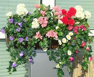 Balkonpflanzen Sonnig Pflegeleicht : balkonpflanzen sonnig pflegeleicht 21 balkonpflanzen die zu ihrem eingenen balkon passen ~ Frokenaadalensverden.com Haus und Dekorationen