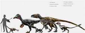 10 Swift Facts About Velociraptor | Mental Floss  Velociraptor