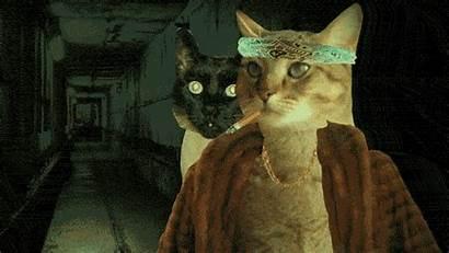 Cat Gifs Ever Bizarre Memes Hummer Litter
