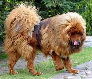 Biggest Dog Breed   www.pixshark.com - Images Galleries ...