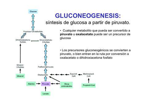 gluconeogenesis assignment point