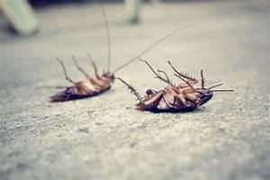 Tuer Les Cafards : comment se d barrasser des cafards de fa on efficace ~ Melissatoandfro.com Idées de Décoration