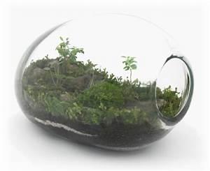 Pflanzen Für Terrarium : designer idee originelles terrarium f r ihre bonsai b ume ~ Orissabook.com Haus und Dekorationen