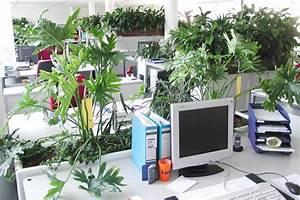 Büro Pflanzen Pflegeleicht : ohne erk ltung durch den winter keine chance f r viren luftbefeuchtung mit pflanzen ~ Michelbontemps.com Haus und Dekorationen