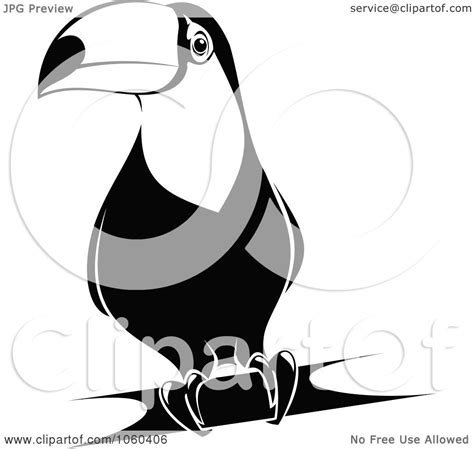 toucan clipart black and white royalty free vector clip illustration of a black and