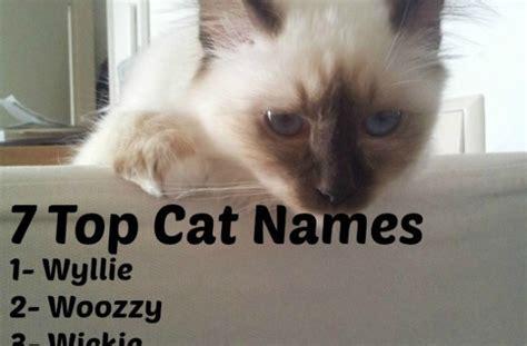 cat names unique cat names 28 images unique female cat names driverlayer search engine cool warrior