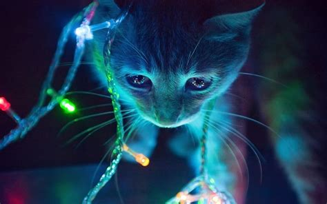 cat christmas tree lights wallpaper