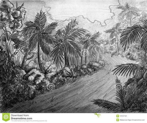jungle road stock image image