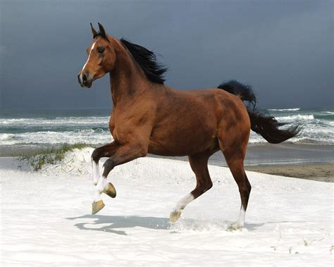 horse domestic animals fanpop animal horses bing pets hourse equestrian wild foal fotos poster