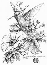 Coloring Pages Hummingbirds Hummingbird A4 Printable Sheets Hb Done sketch template