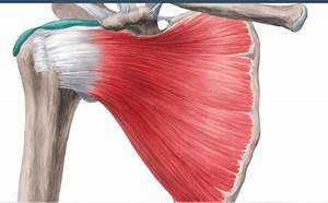 Know Your Body  Know Your Swing  Adducting The Back Arm