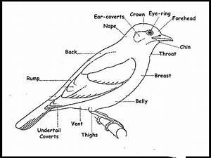 Bird Topography