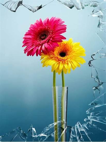Flowers Wallpapers Flower Google App Install Iphone