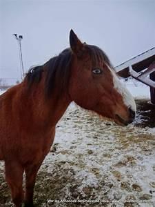2 Chevaux Occasion : cheval de r ve vente vente rapide 3 chevaux pas cher ~ Medecine-chirurgie-esthetiques.com Avis de Voitures