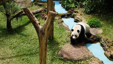 harga tiket masuk  lokasi istana panda taman safari