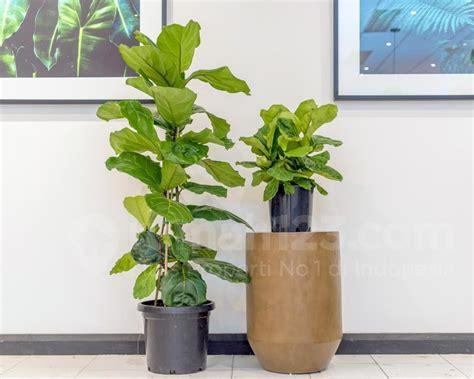 tanaman ruangan tren rumahmu tengok yuk