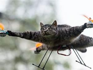 Drohne Auf Rechnung : k nstler montiert ausgestopfte katze auf drohne blick ~ Themetempest.com Abrechnung