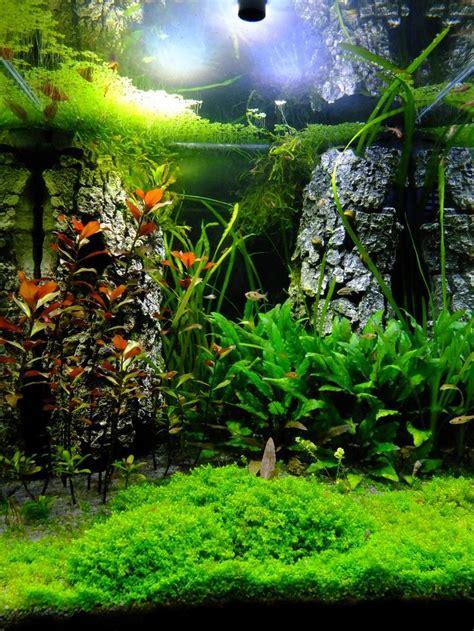 25 best ideas about aquarium einrichten auf - Aquascaping Forum