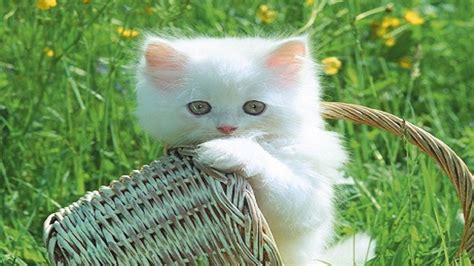 funny cats  kittens wallpaper  hd hd wallpaper
