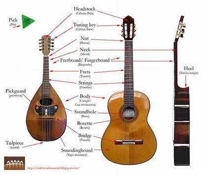 Collective Guitar Parts Mandolin Class